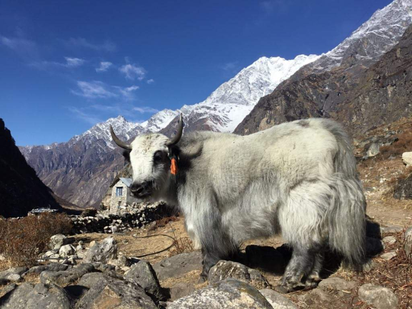 Langtang Valley Trek $855